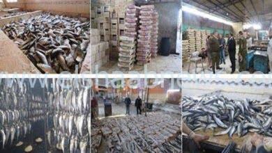 Photo of قبل بيعها للمواطنين.. ضبط 2 طن أسماك مملحة فاسدة